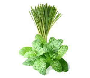 lemongrass-mint-balsamic-condimento