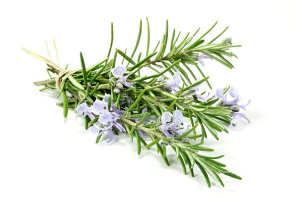 Wild Rosemary Fused Olive Oil