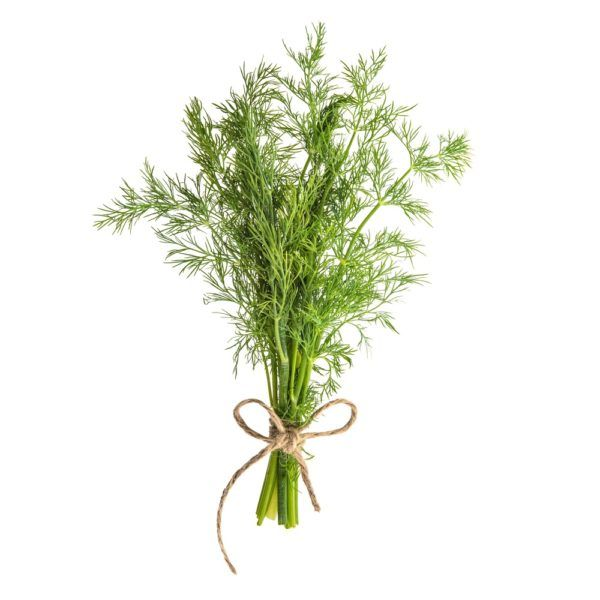 wild-fernleaf-dill-infused-olive-oil