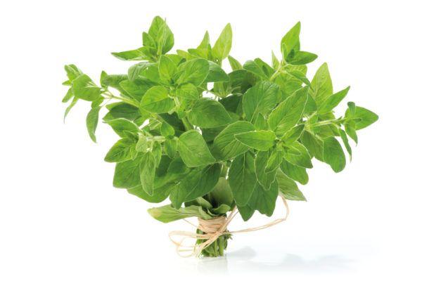 Fresh Oregano Balsamic